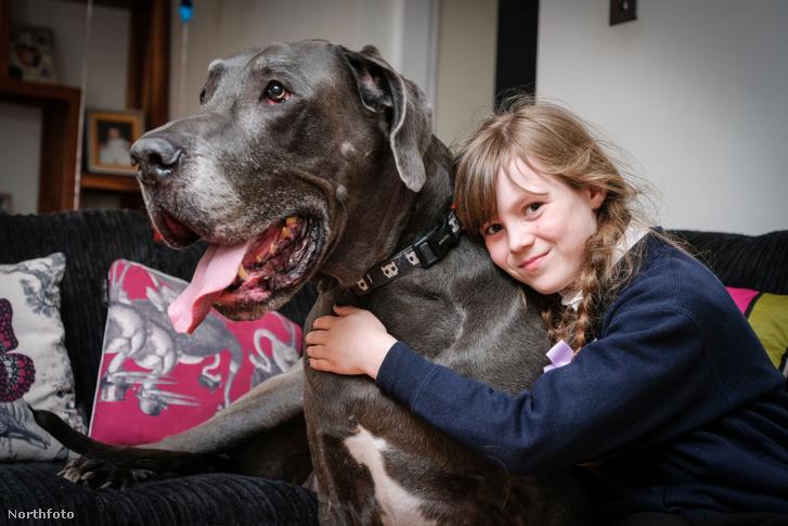 tk3s swns giant dog 19