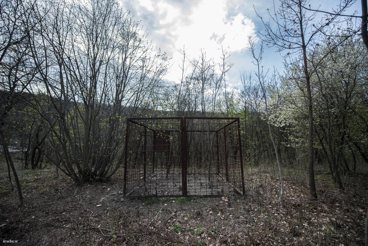 egy vaddisznócsapda, mely évente akár 3-4 állatot is elejt. Bajuk állítólag nem lesz, a vadászok visszaviszik őket a Budakeszi-erdőkbe.Hogy a fácánok visszatérnek-e még valaha a Fácánosba, nem tudom, de az egykori gyönyörű épületek úgy tűnik még visszakaphatják régi szépségüket, és újra megtelhetnek élettel.