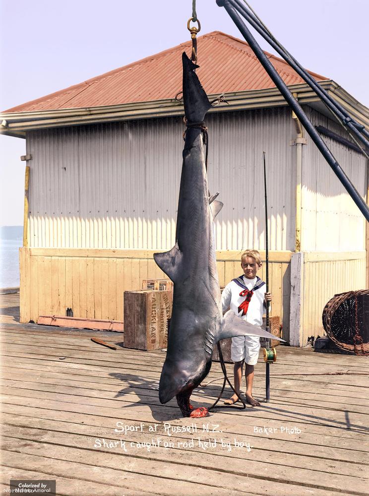 """""""A cápa elkapta Russlet"""