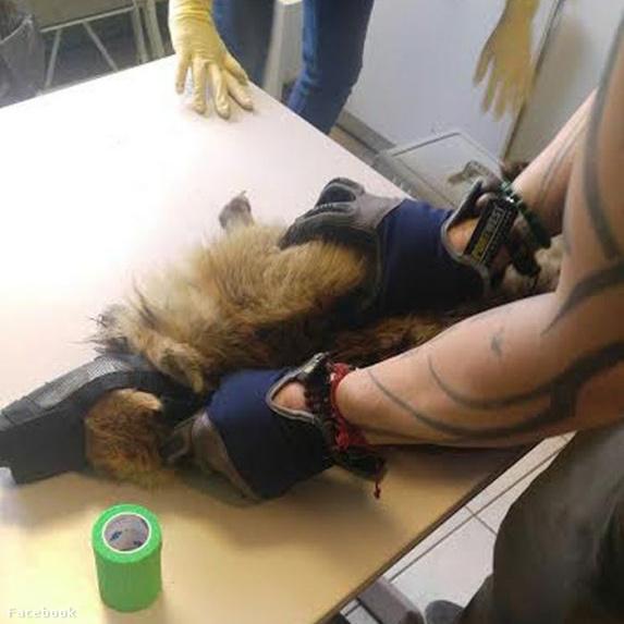 Nem tudtak segíteni a sérült állaton