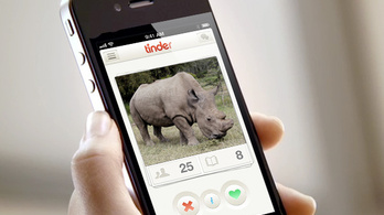 Tinderező orrszarvú: nem párt, hanem pénzt keres a neten