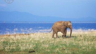 Sri Lanka: utazási irodával vagy egyénileg?