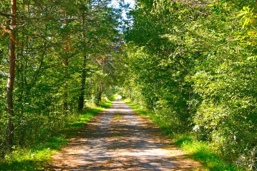 A 6 kilométeres Körtike tanösvény Szalafő-Csörgőszerről indul, végpontja pedig Pityerszer, az út az őrségi kaszálók és erdők élővilágát mutatja be.