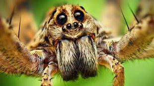 Valójában a pók az ember legjobb barátja!
