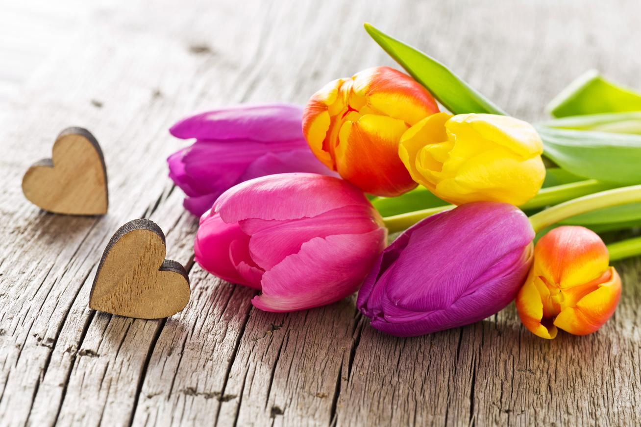 szines-tulipanok
