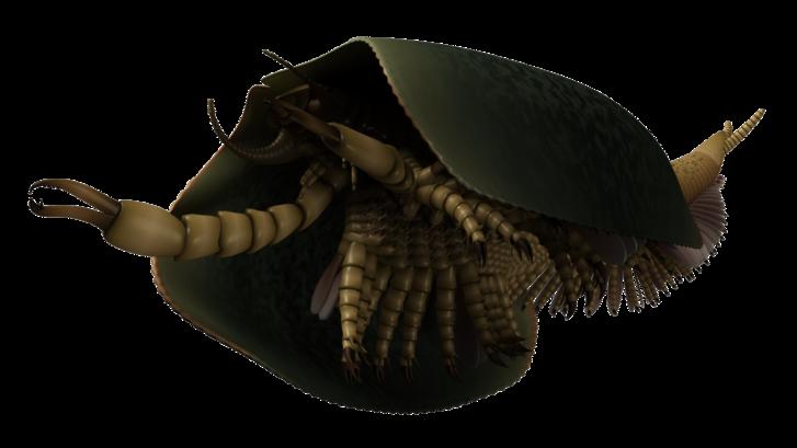 1-paleontologi.png