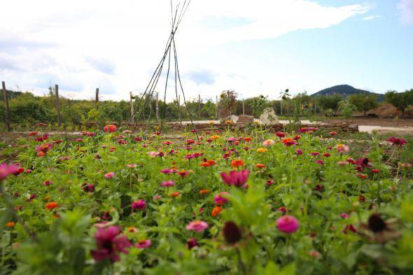 Virágok a Gyógynövény-völgy