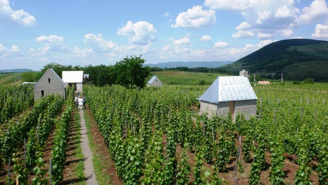 Ingyenes majálist szerveznek az egri borászok