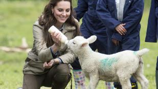 Katalin hercegné bárányt táplált