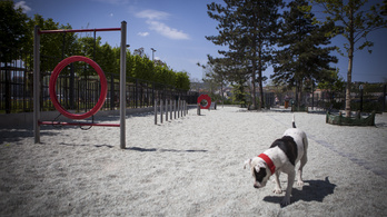 Térképen a magyarországi kutyafuttatók, kutyajátszóterek
