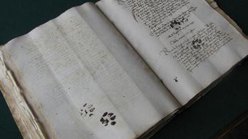Már a középkorban is azt csináltak a macskák, amit csak akartak