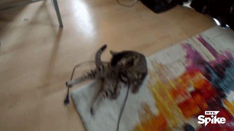 macska.gif