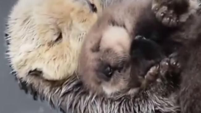 Sehol sem lennénk a mamánk nélkül - gondolták ebben a videóban ezek az állatkölykök