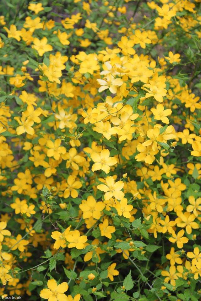 Megérkezett a tavasz a Budakeszi Arborétumba is
