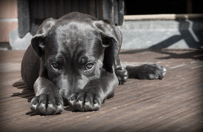 kutyus-szomoru