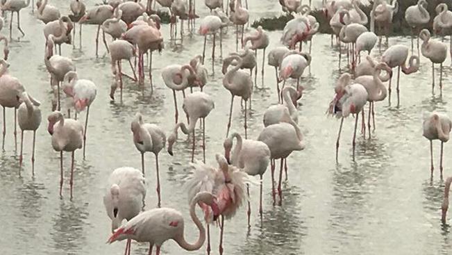 Dubaj az állatoktól sem sajnálja a pénzt: teljesen új köntösbe öltözteti állatkertjét