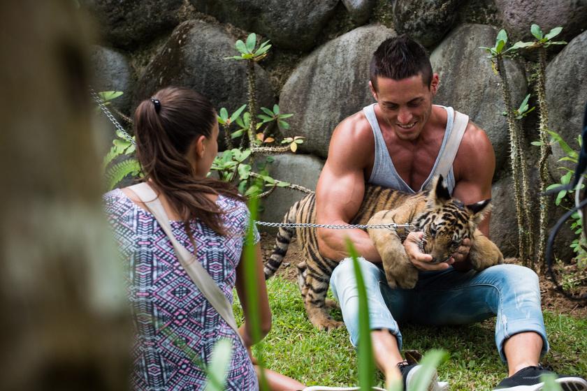 Ezzel a kis tigrissel is eljátszadoztak.