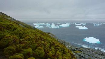 Már zöldül az Antarktisz