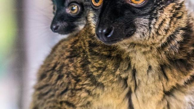Anyja hátáról szemlélődik a legújabb kismaki Nyíregyházán