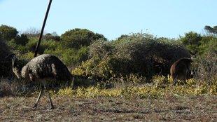 Emuk és az ezerlábú