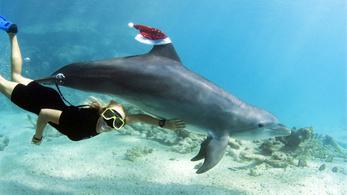 A delfineknek nem tesz jót a búvárkodás