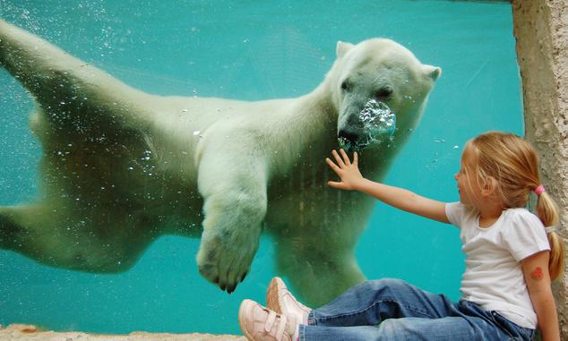 A jegesmedve például már most is nagyon barátkozós