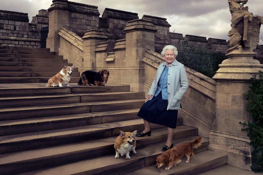 Az elmaradhatatlan fotó Erzsébet királynő imádott corgijaival. Az ölebek gyerekkora óta részei az életének, több mint 15 corgi gazdája volt eddig.