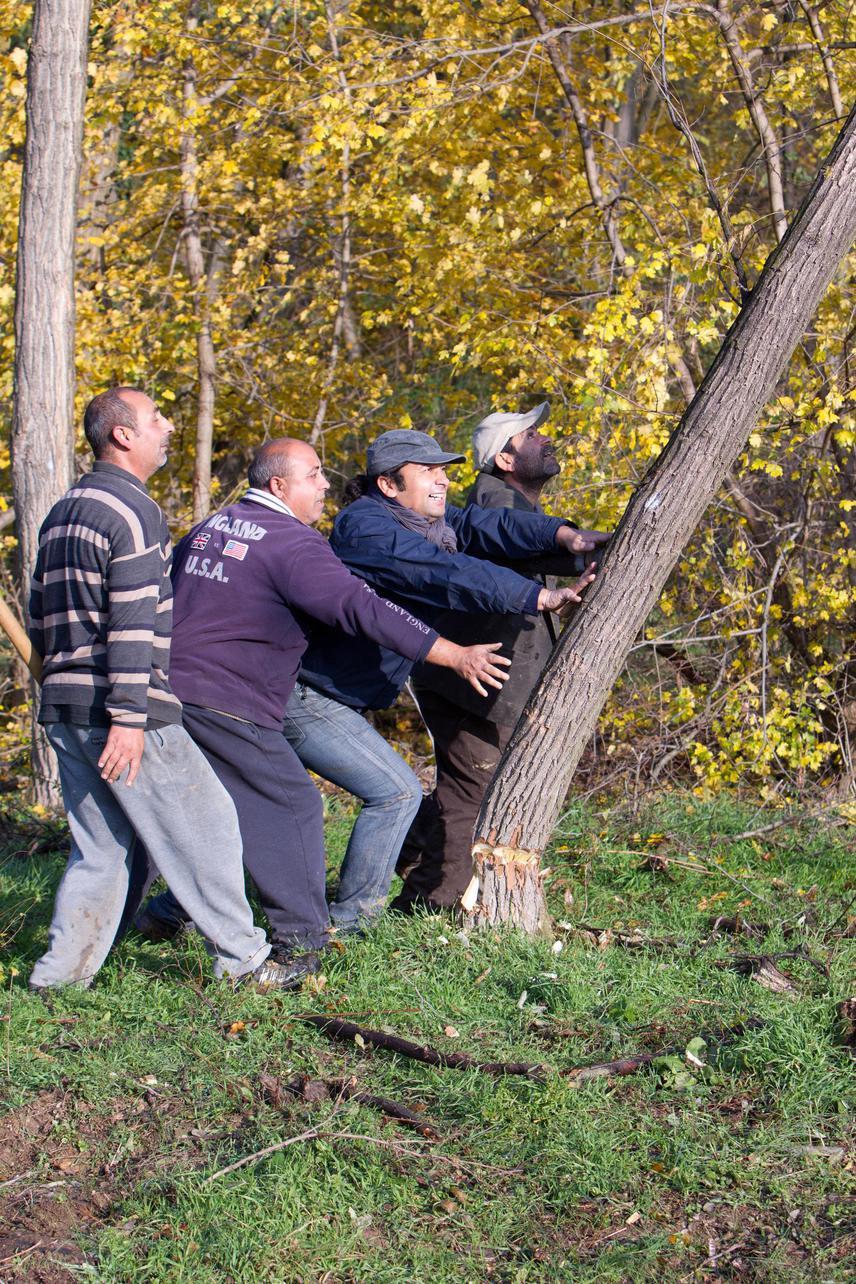 A mérhetetlen szegénység miatt nem volt pénz tüzifára sem, a falopást azonban Cserdiben nem büntette a polgármester. Sőt, a bajt megelőzvén önkormányzati erdőt is létrehoztak, ahol ma már a falu lakói közösen termelik meg a tüzelőt. Az erdő azóta ellátja a helyieket fával, telente senki sem fázik.