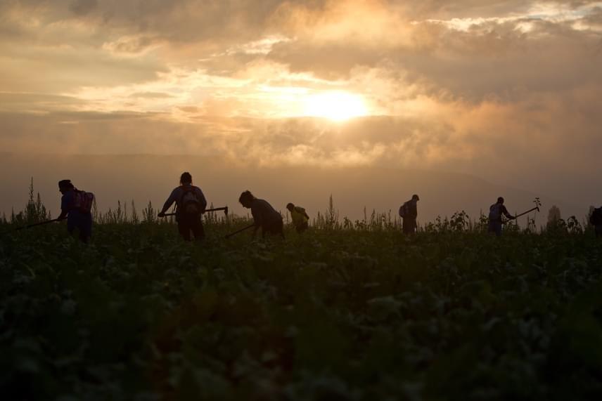 Jelenleg 64 közmunkás dolgozik a faluban. A földeken, a fóliasátrakban számtalan zöldség megterem. Ezen felbuzdulva a cserdi hivatalnál zöldséges is nyílt, ahová a nagy tételben vásárlók rekeszekkel érkeznek.
