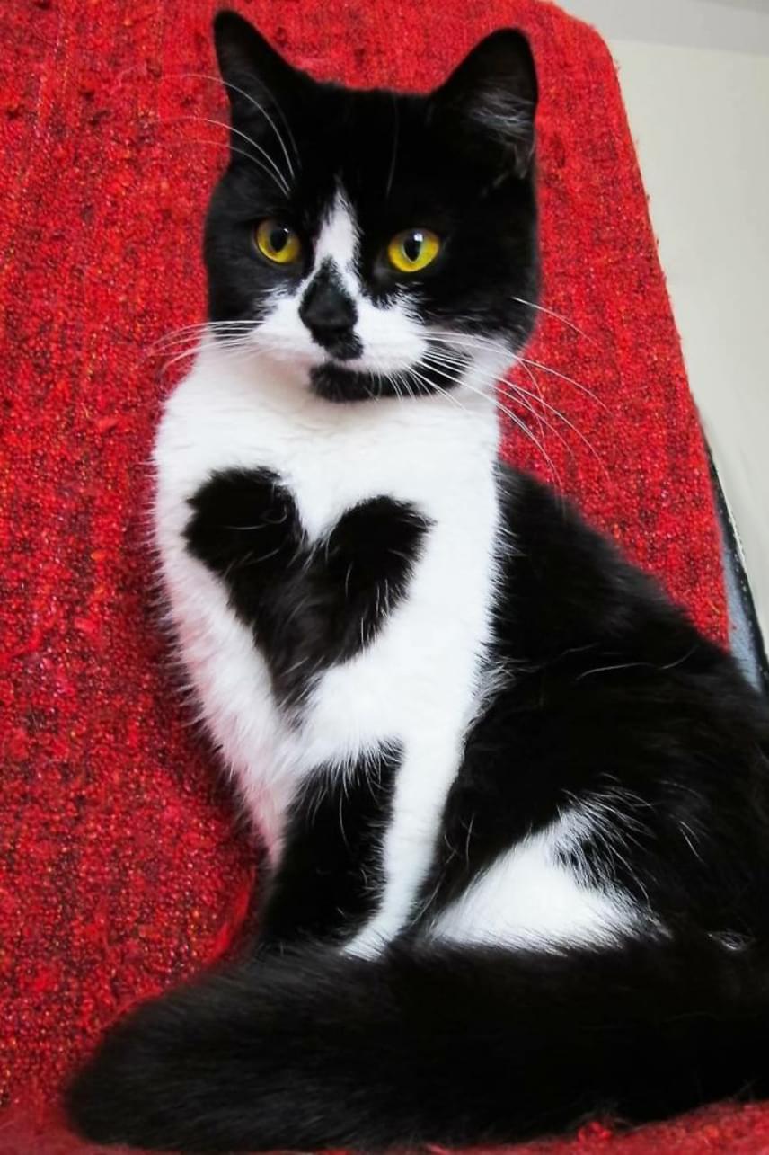 Zoë bundáján egy fekete színű, szív alakú folt látható: nem csoda, hogy sokan cuki plüssállatnak nézik az internet legújabb sztárját.
