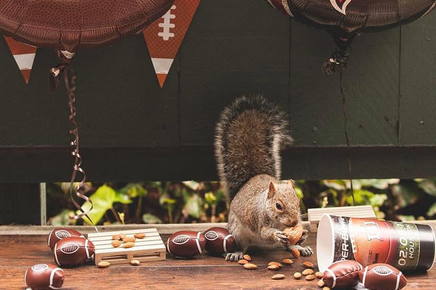 A berendezett mókuspartik egy része tematikus. Ez az állatka például egy Super Bowl-szurkolói buli közepébe csöppent.
