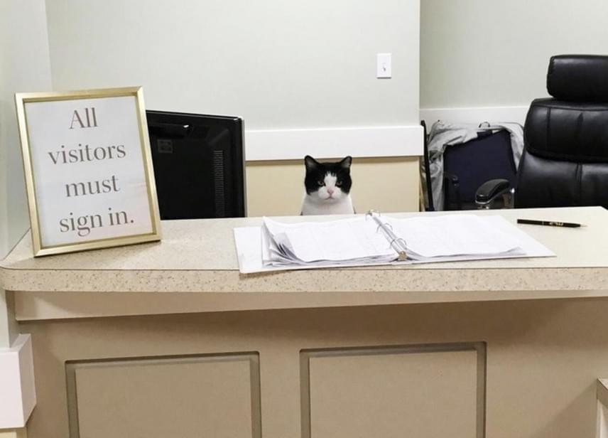 Oreo így üldögél munka közben a St. Augustine Health Ministries nevű ohiói idősek otthonának recepcióján.