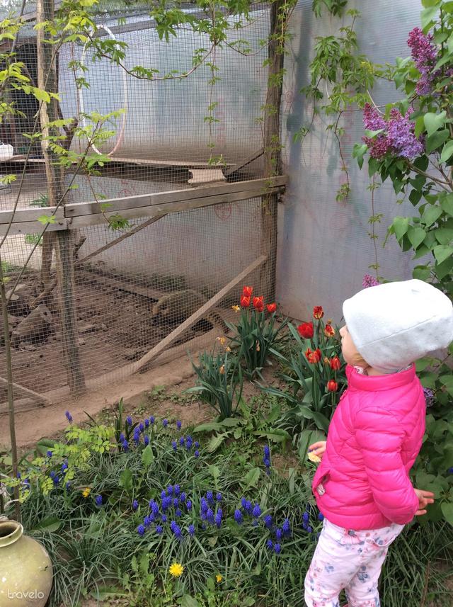 A cikk írójának lánya épp az ormányos medvéket figyeli