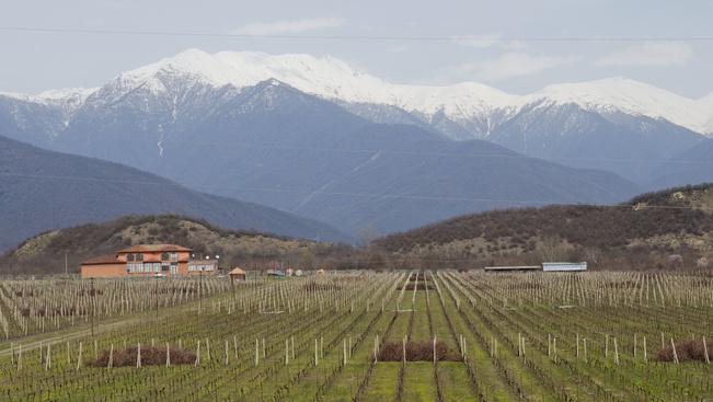 A bor őshazáját Ön hol keresné? A megfejtés: Grúzia
