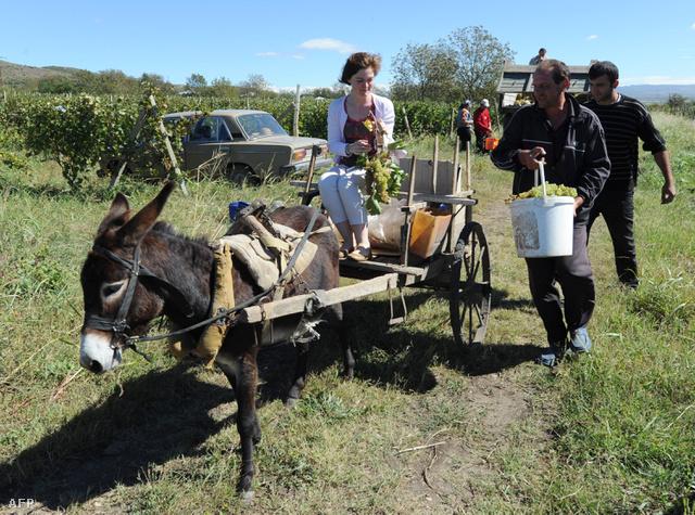 Szamár, kocsi, szőlő, Zsiguli