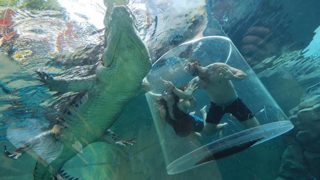 Ha a cápa nem elég, merüljön a krokodilok közé!