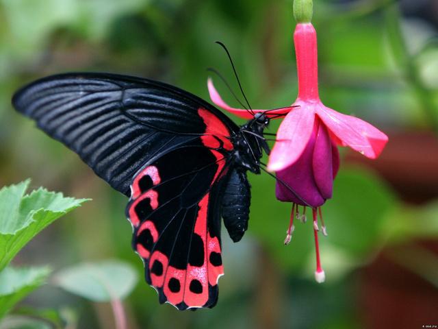 Ez a kép egy egzotikus fajról Costa Ricán készült, de hasonlóakra számíthatunk az Állatkertben is