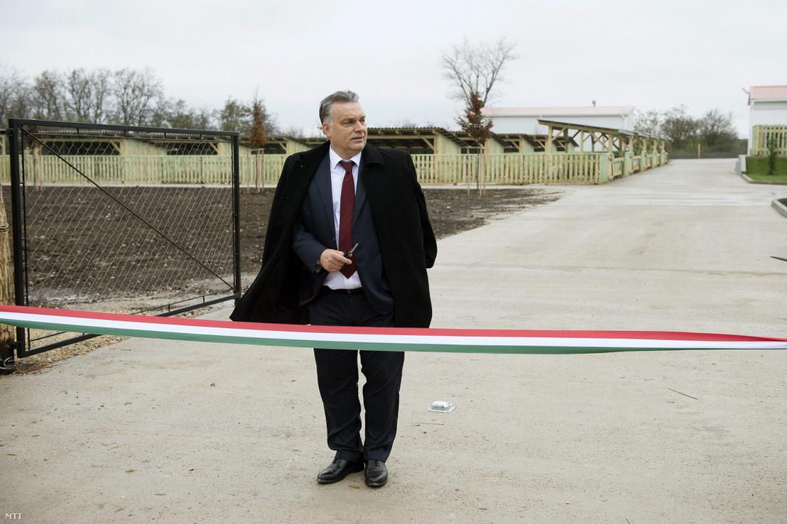 Orbán Viktor miniszterelnök a Búzakalász 66 Felcsút Kft. bányavölgyi mangalicatelepének avatásán a Fejér megyei Alcsútdobozon 2014. november 18-án.