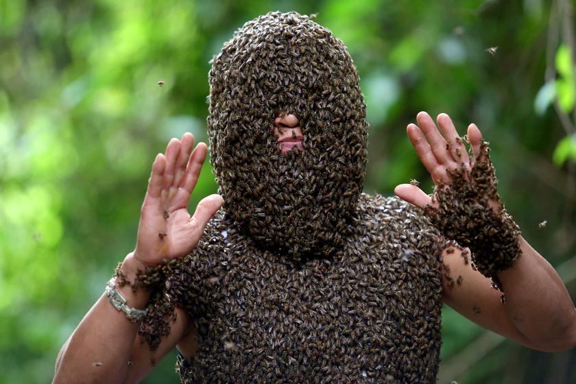 Döbbenetes látvány: a rovarok csak a méhész orrát hagyták szabadon.