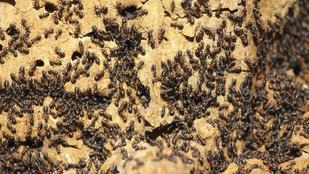 6 tipp hangyák ellen