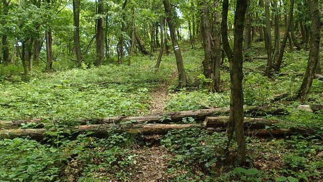 Az új útvonal kezdetben egy erdőben halad