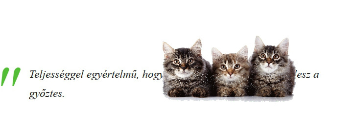 macskák vicc