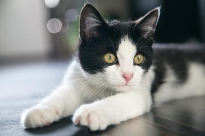 macska-fb