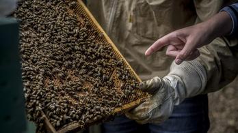 Méhekkel állítanák meg a külföldre készülő fiatalokat