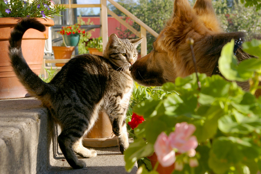 macska-kutya