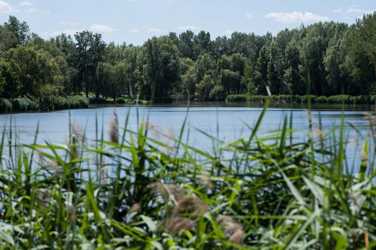 A Malom-tó labirintusszerűségével szemben a középső, Ivacsi-tósokkal letisztultabb.