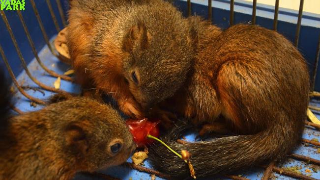 Ne nyúljanak a kismókusokhoz! - figyelmeztet a vadaspark
