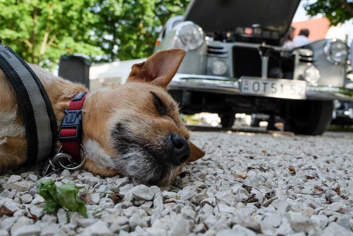 Magyarországról származik a pontonos bácsi kutyája