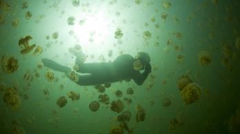 Tényleg segít, ha lepisiljük a medúzacsípést?