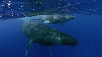 Az ENSZ szerint védeni kell az óceánokat